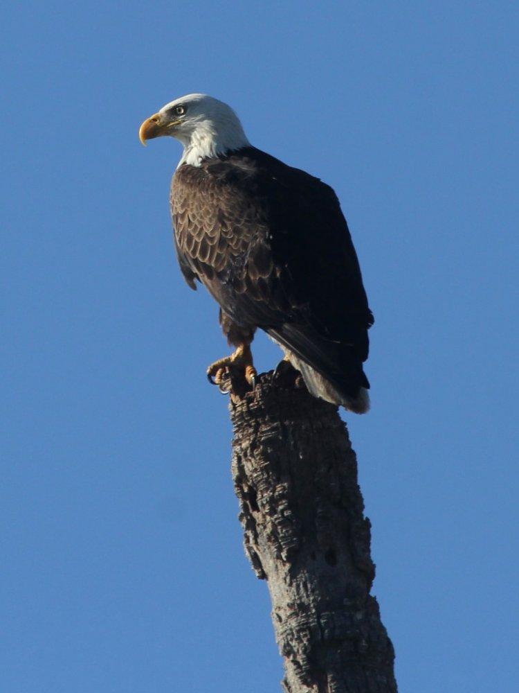 eagle 2021-02-11-02.jpg