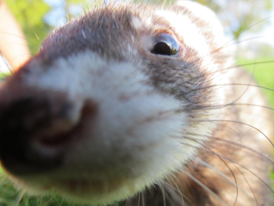 Ferret close up.jpg