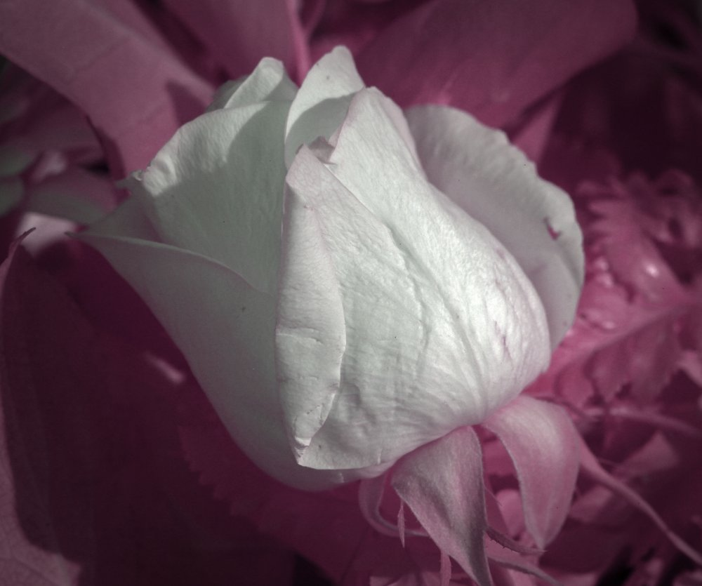 IMG_9200 pink.jpg