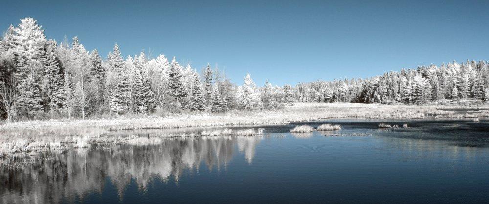 IMG_9419 white trees.jpg