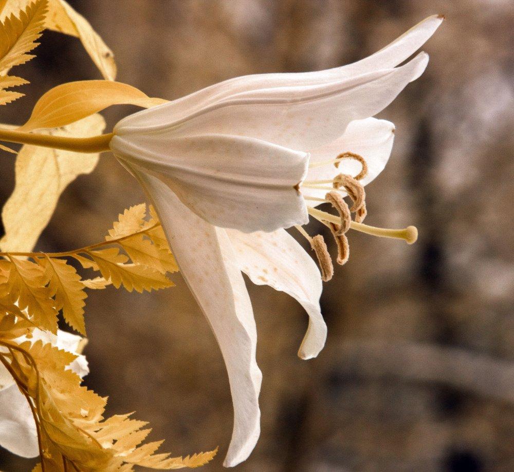 IMG_9445 gold.jpg