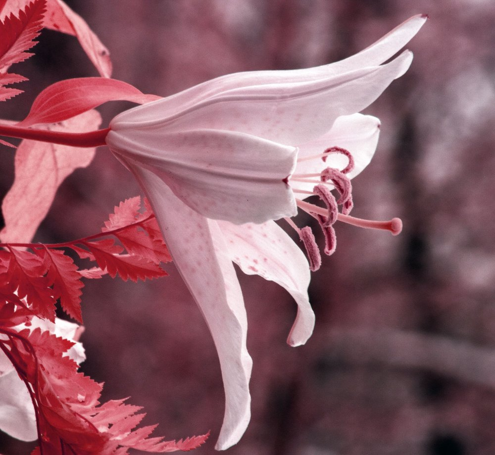 IMG_9445 red.jpg