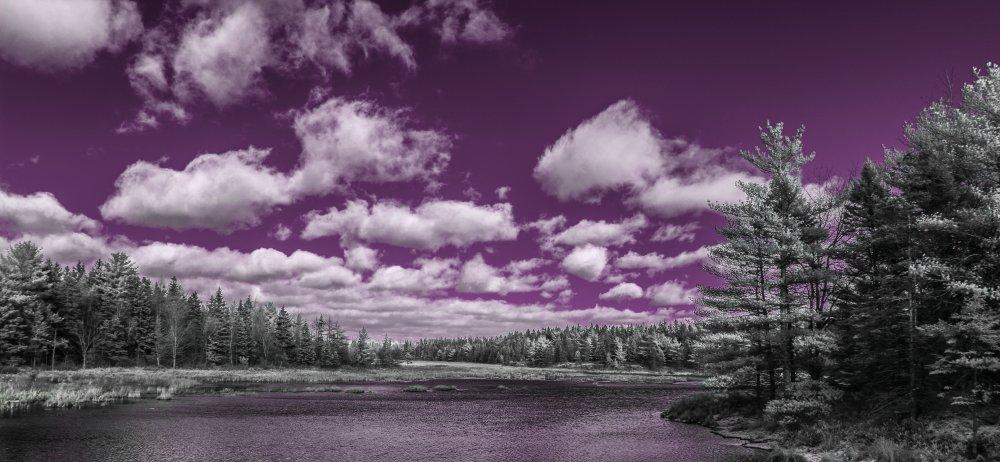IMG_9498 purple.jpg
