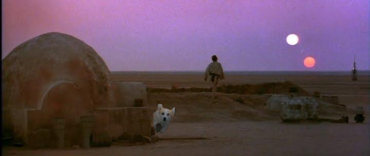 Star-Wars-A-New-corgi.jpg